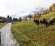 Este gardul electric sigur pentru animale?
